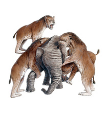 Homotherium sabretooth cats and prey, illustration