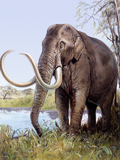 Columbian mammoth, illustration