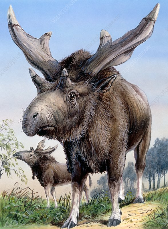Sivatherium, illustration