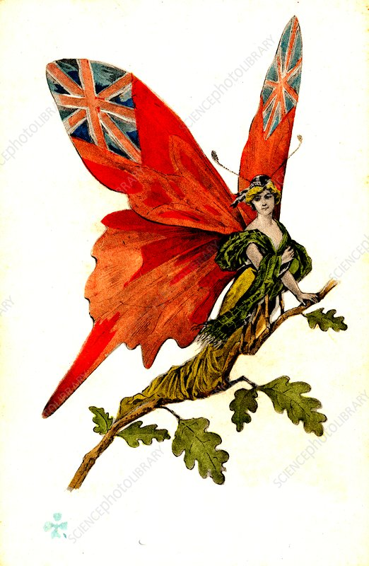 British butterfly, early 20th Century conceptual image