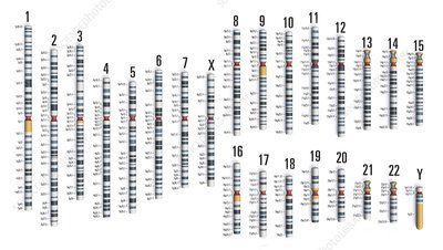 Human genome, illustration
