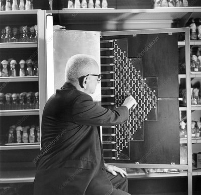 Russian-US geneticist Dobzhansky with fly maze, 1965