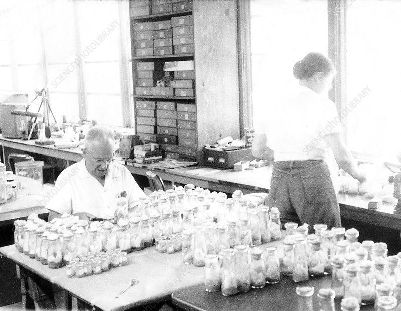 Russian-US geneticist Dobzhansky with fly jars, 1959