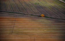 Irrigated fields, Spain, aerial photograph