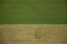 Mixed farm, Spain, aerial photograph