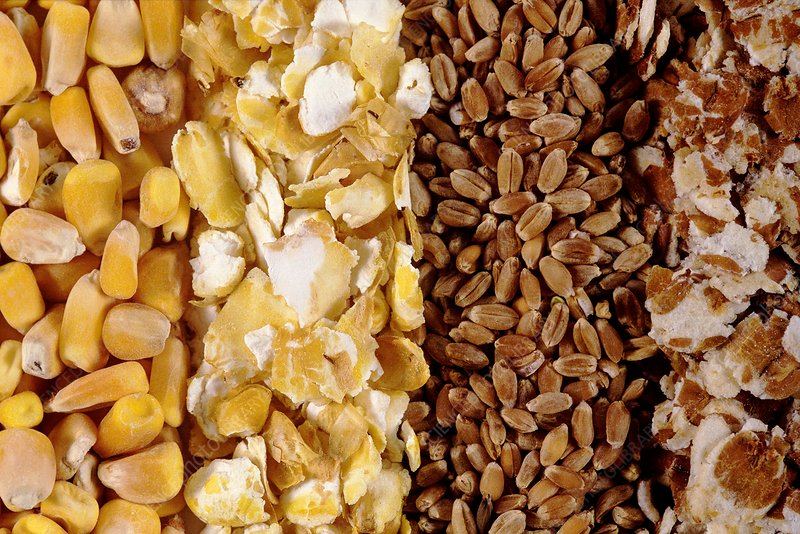Maize and wheat grains, unmilled and milled