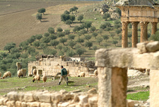 Sheep in Roman ruins at Dougga, Tunisia
