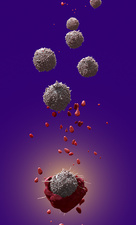 T-cell attacking cancer cell, illustration