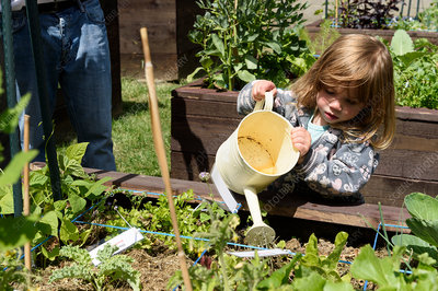 Child watering vegetables