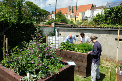 People tending vegetables in raised beds