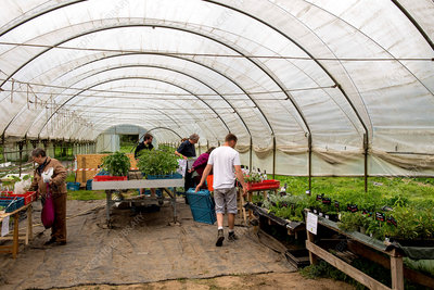 People examining plants in a polytunnel