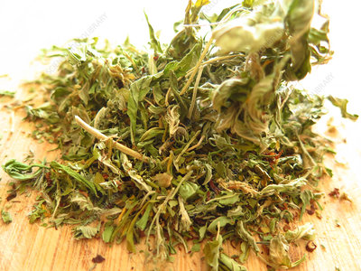 Cannabis sativa, dried leaves