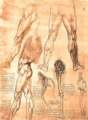 Comparative anatomy of man and horse