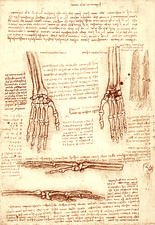 Hand and wrist bones, illustration