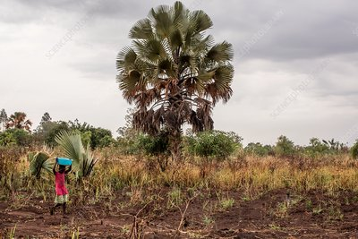 Child carrying crops