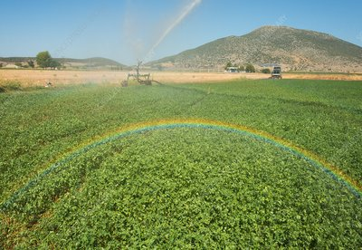 Spray Irrigation of Alfalfa field, Greece