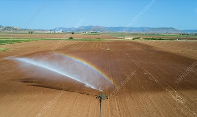 Spray irrigation of a red onion field.