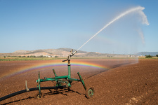Spray irrigation of a red onion field