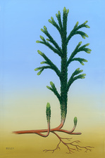 Asteroxylon sp. prehistoric plant, illustration