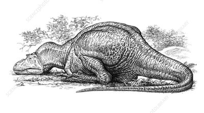 Albertosaurus dinosaur sleeping, illustration