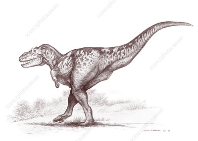 Tarbosaurus dinosaur, illustration