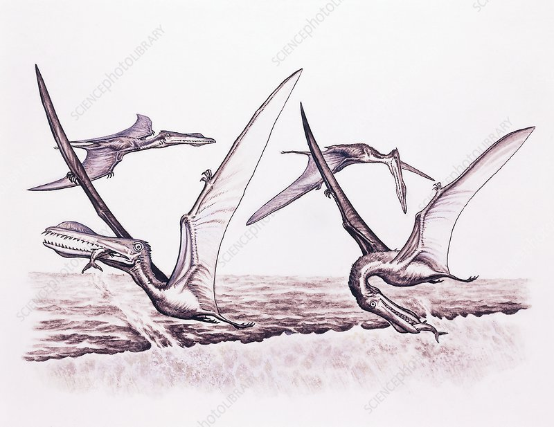 Pterosaur flying reptile fishing technique, illustration