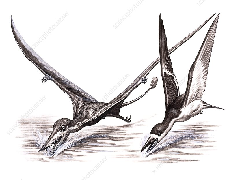 Pterosaur and skimmer fishing techniques, illustration