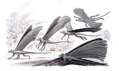 Longisquama lizard gliding, illustration