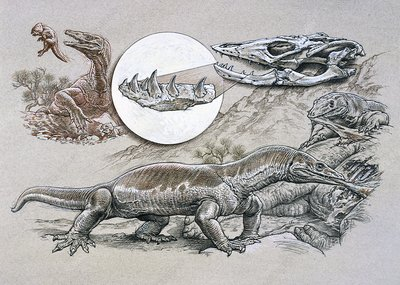 Estesia reptile anatomy and behaviour, illustration