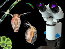 Microscope and pond life, composite image