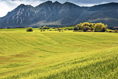 Barley field, Spain