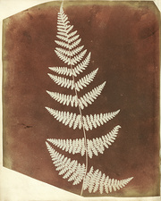 Fern fronds by Talbot, 1839