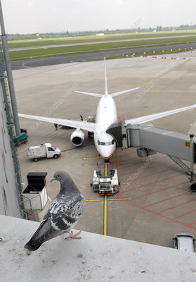Aeroplane parked at gate
