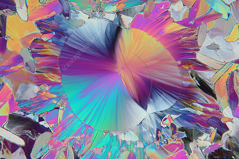 Dopamine crystals, polarised light micrograph