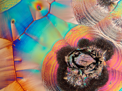 Vitamin C crystals, polarised light micrograph