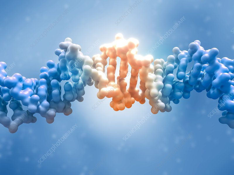 DNA editing, conceptual illustration