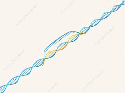 Gene editing complex, illustration