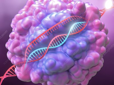 CRISPR-Cas9 gene editing complex, illustration