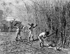 19th Century sugar cane plantation, Cuba