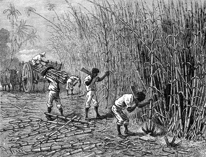19th Century sugar cane plantation, Cuba