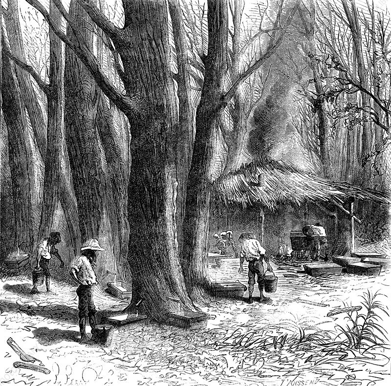 19th Century Canadian maple syrup production, illustration