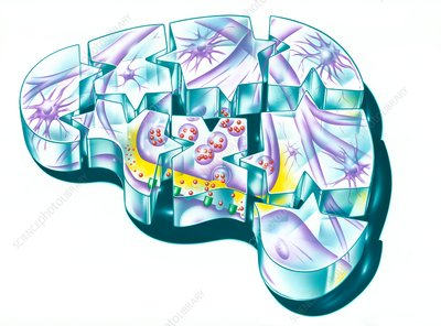 Brain and nerve synapse, illustration