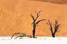 Dead trees in desert, Namibia