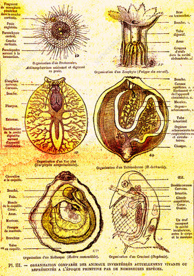 Evolution of aquatic organisms, 19th Century illustration