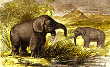Prehistoric elephants, 19th Century illustration