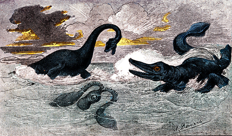 Prehistoric predatory sea animals, 19th C illustration