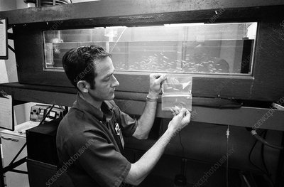 Fish research experiment for Skylab, 1973