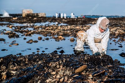 Oil spill cleanup, Sakhalin, Russia