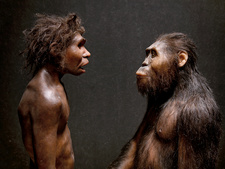 Early human models