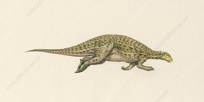Scelidosaurus dinosaur, illustration